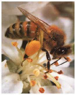 a bee honey albuquerque and surrounding states